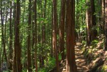 Muir Woods S4