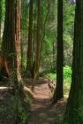 Muir Woods S15