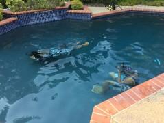 2018_underwatershoot18